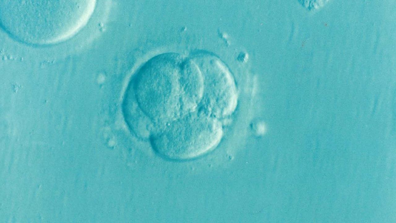 不妊治療である胚移植の実際